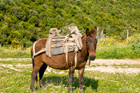 Mule with Wooden Saddle