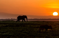 African Elephant and Wildebeest at Sunrise