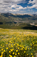 Yellow Wildflowers and Mountain Range