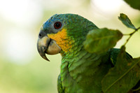 Parrot in the Amazon Jungle