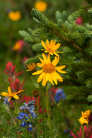 Wildflowers in a Pine Forest