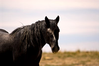 Wild Horse in Wyoming Desert