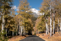 Aspen Lined Road in Rocky Mountain National Park