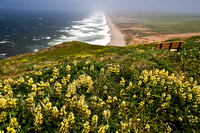View of Beach at Point Reyes National Seashore
