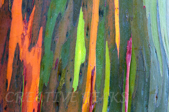 Creative Peaks Photography | Kauai, Hawaii 2011 | Rainbow Eucalyptus ...: jmirro.zenfolio.com/p569847786/h309A5AA7
